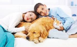 How To Keep Your Pet Guarded and in Fine Fettle?