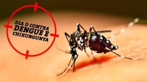 Protect yourself from dengue and chikungunya with these home remedies!