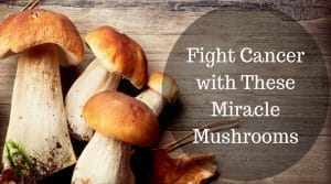 Learn the Beneficial Properties of Medicinal Mushrooms against Cancer