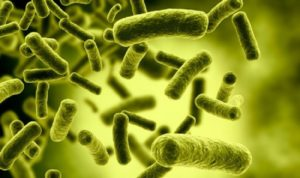 Probiotics a treasure from the ancient period till now and will forever
