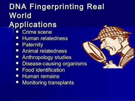 a study on the methods of fingerprinting dna typing and gene mapping in the research related to huma The human genome is the complete set of nucleic acid sequences for humans, encoded as dna within the 23 chromosome pairs in cell nuclei and in a small dna molecule found within individual mitochondria.