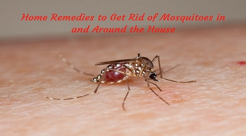 Worried due to terror of Mosquitoes? Then adopt these