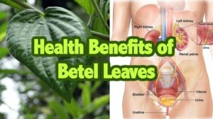 KNOW THE SURPRIZNG BENEFTS OF EATNG BETEL LEAF