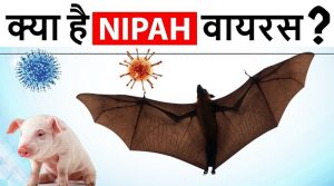 WHAT IS NIPAH VIRUS INFECTION? ITS CAUSES, SYMPTOMS, TREATMENT AND PREVENTION