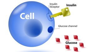 INSULIN BOOSTS THE IMMUNE SYSTEM