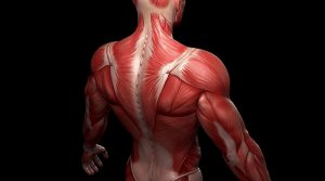 DOES ARTIFICIAL PROTEIN REALLY HELP IN MUSCLE BUILDING?